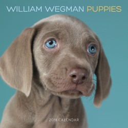 William Wegman Puppies 2019 Wall Calendar
