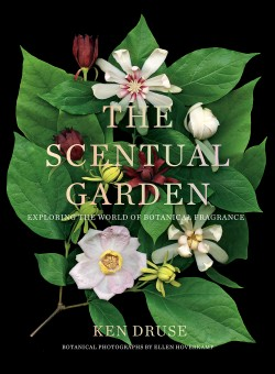 Scentual Garden Exploring the World of Botanical Fragrance