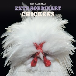Extraordinary Chickens 2020 Wall Calendar
