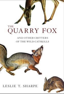 Quarry Fox And Other Critters of the Wild Catskills